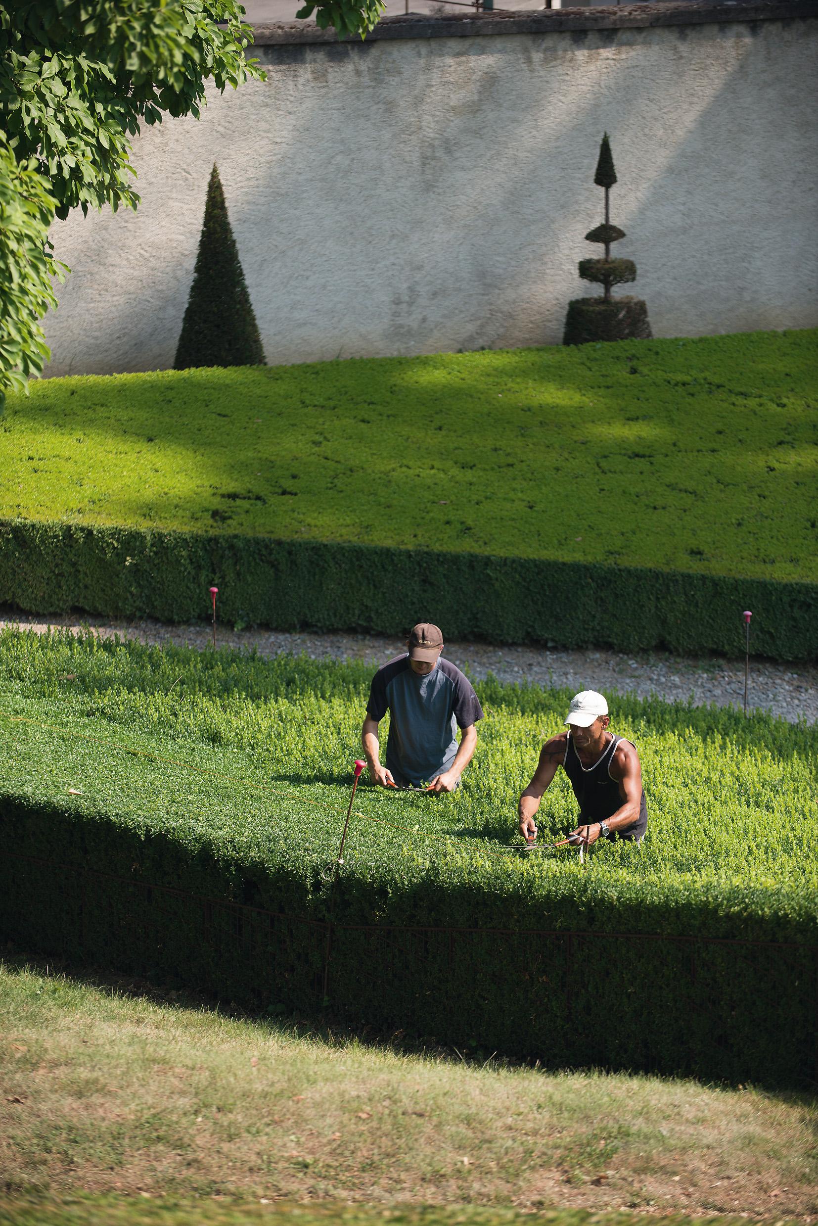 La taille des plateaux de buis par les jardiniers d'art du Domaine national